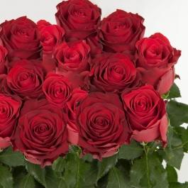 Růže Rhodos